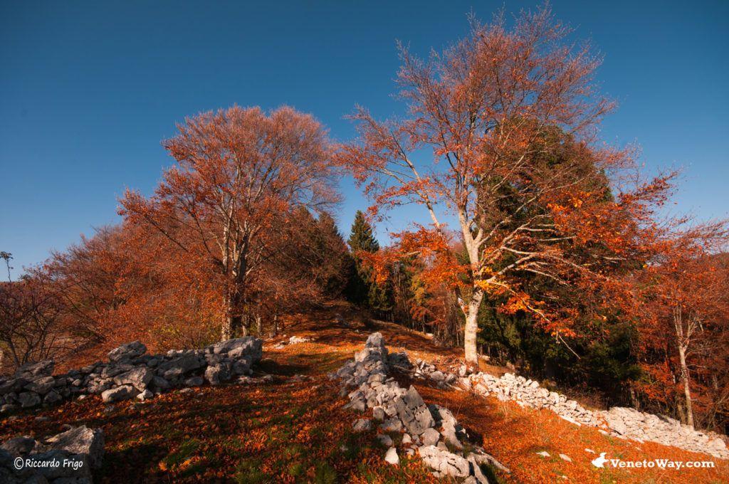 Il Parco Regionale della Lessinia