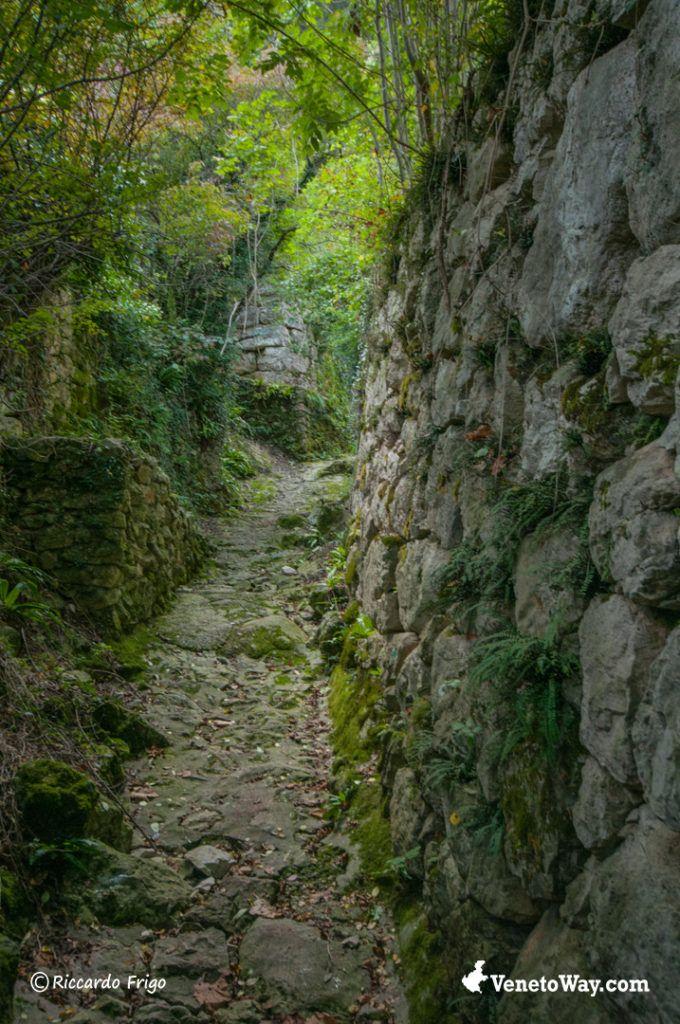 Alta Via del Tabacco in Valsugana