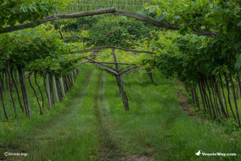 The Wines of the Veneto Region