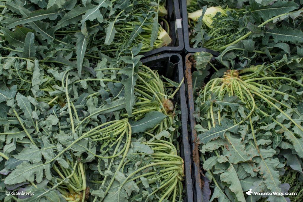 Il Broccolo Fiolaro di Creazzo - Eventi