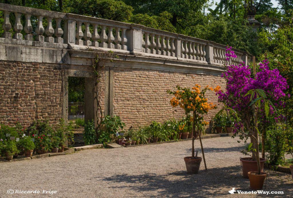 L'Orto Botanico Universitario di Padova