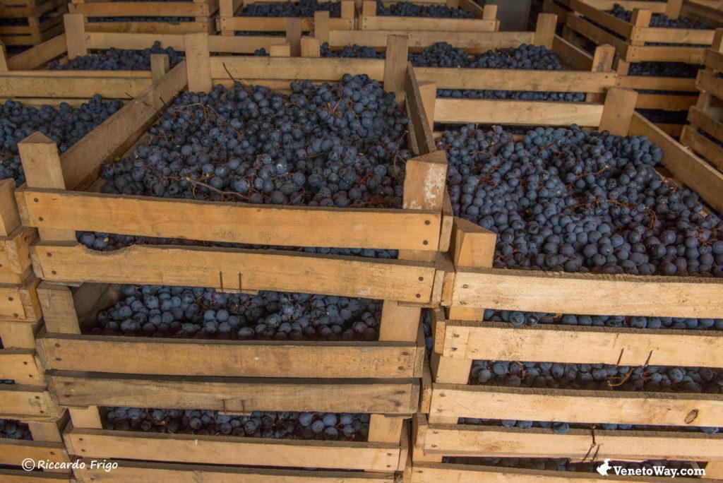 Amarone from Valpolicella