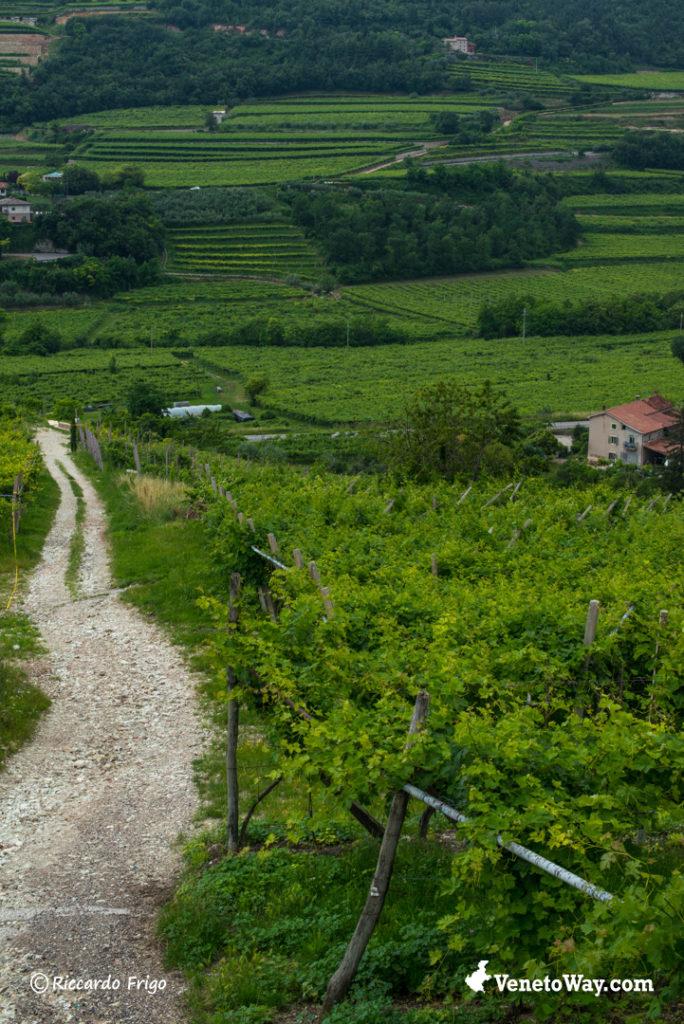 The Ways of Valpolicella Wine