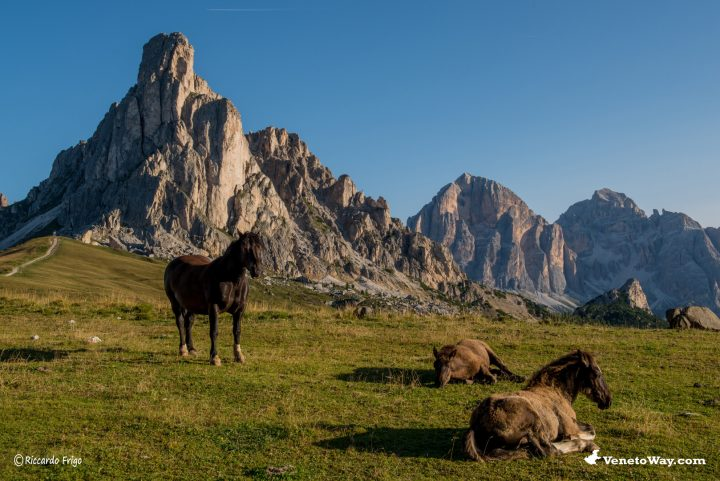 Le Dolomiti Ampezzane