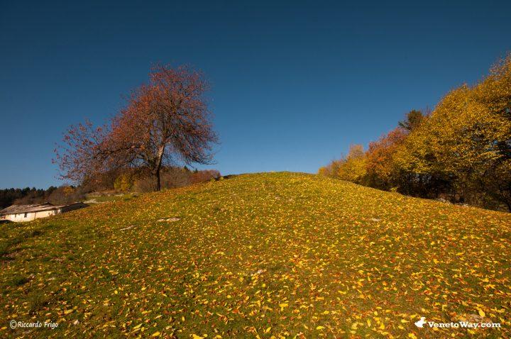 Parco Regionale della Lessinia