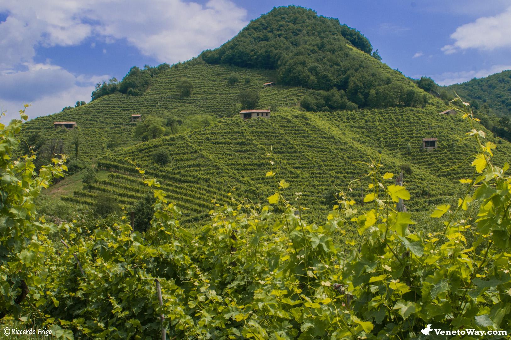 Tra le Vie del Vino Prosecco
