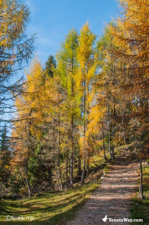 Escursione sul Monte Ortigara