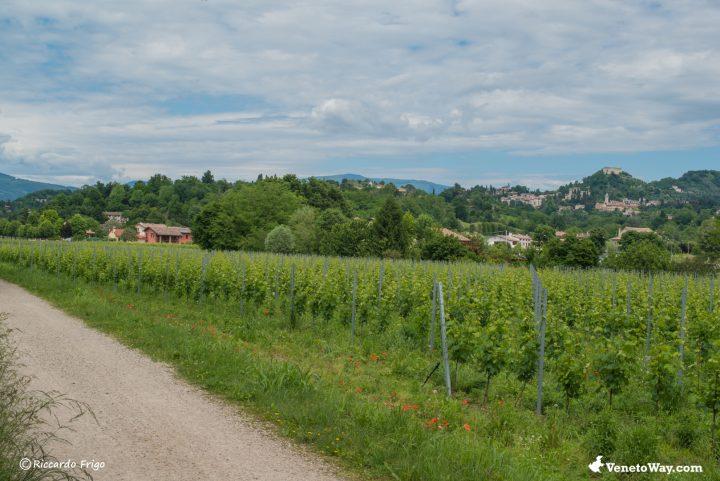 Ciclabile da Pagnano d'Asolo a Castelfranco Veneto