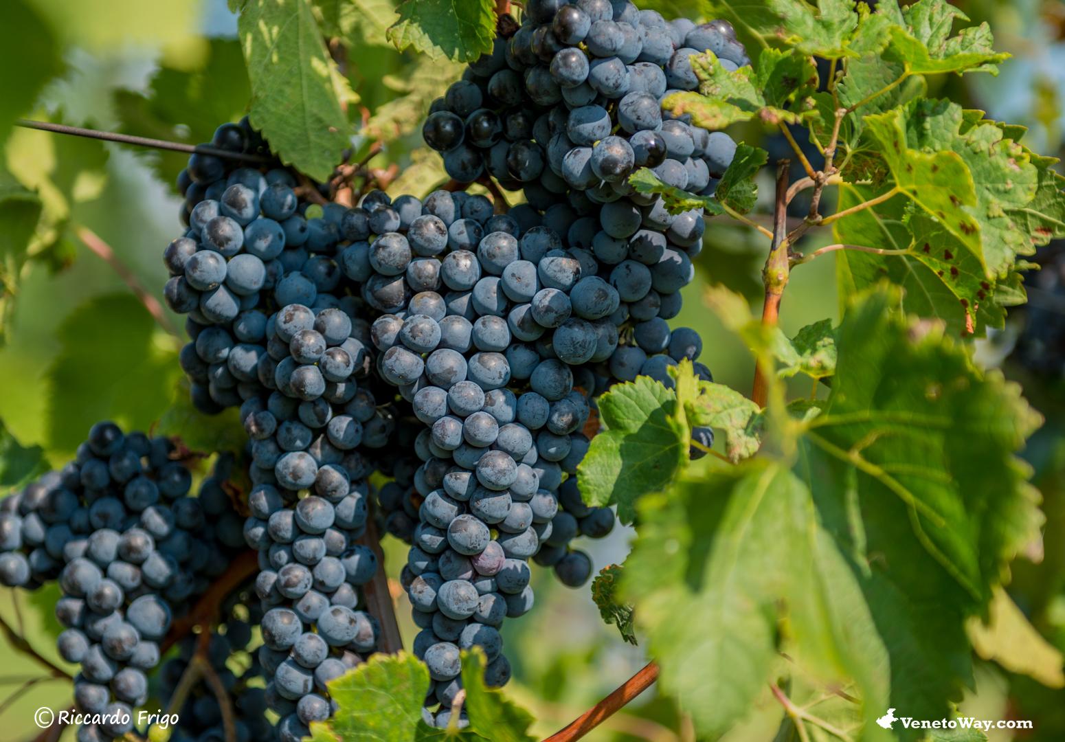 Il Vino di Breganze