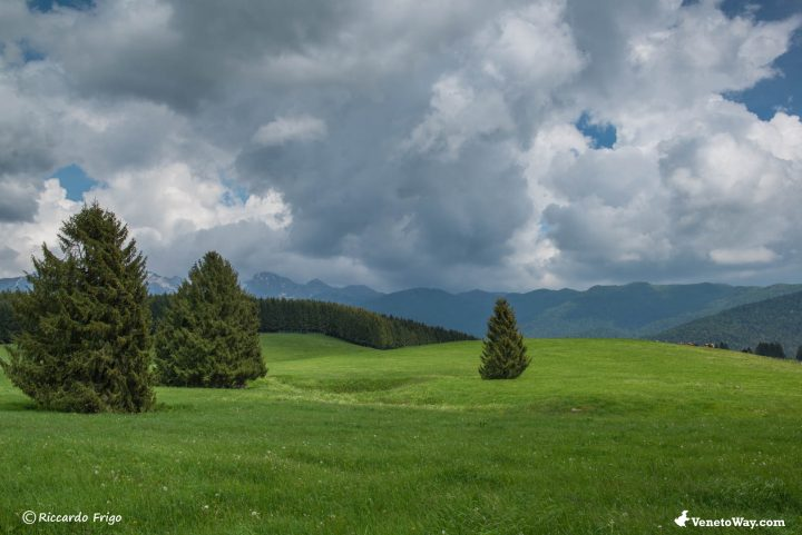 La foresta del Cansiglio - Guida della Regione Veneto